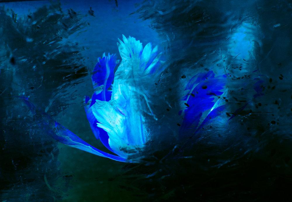 flora blue _2016-06-29 23-01-55.jpg