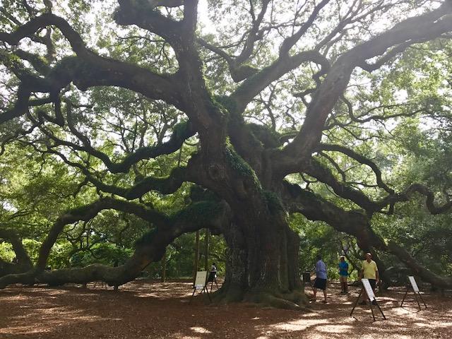 400yroldtree.jpg
