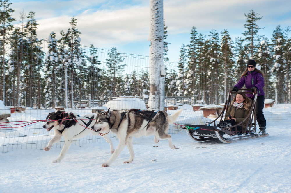 Husky-sledge-ride-lpl.jpg