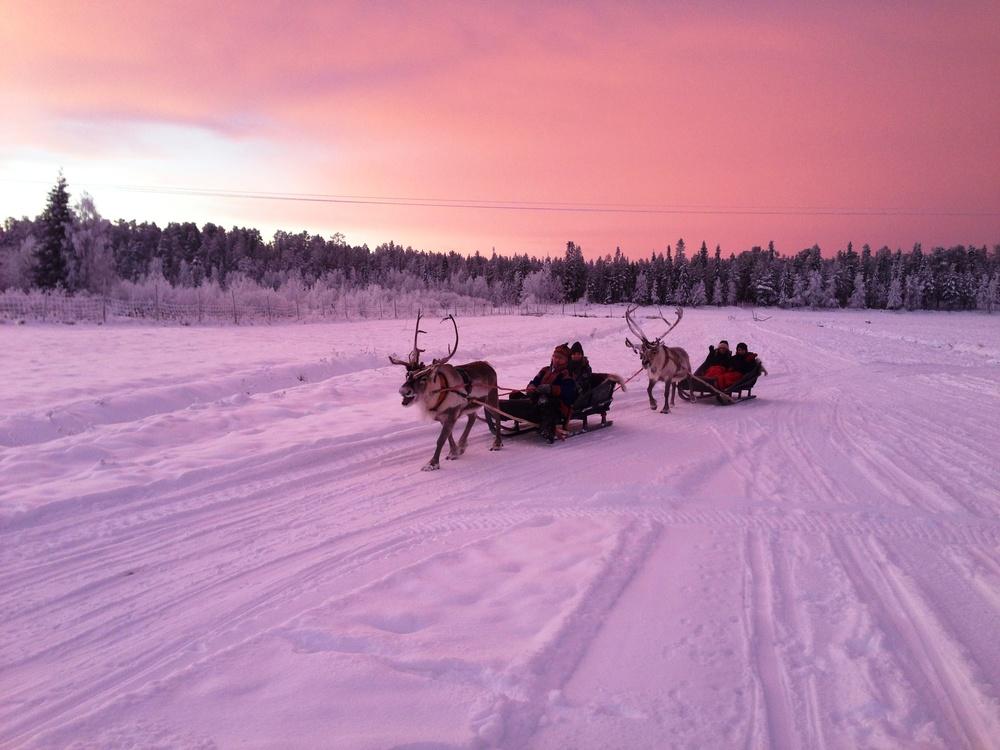 LPL_reindeers_whitespace_LnOzvY.JPEG