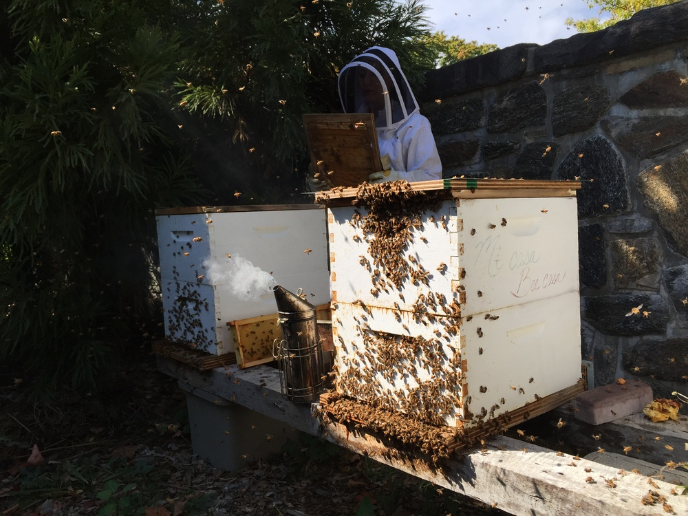 An Apiary in Greenwich, Connecticut
