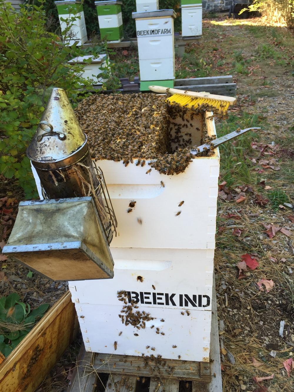 A Bee Yard in Greenwich, CT
