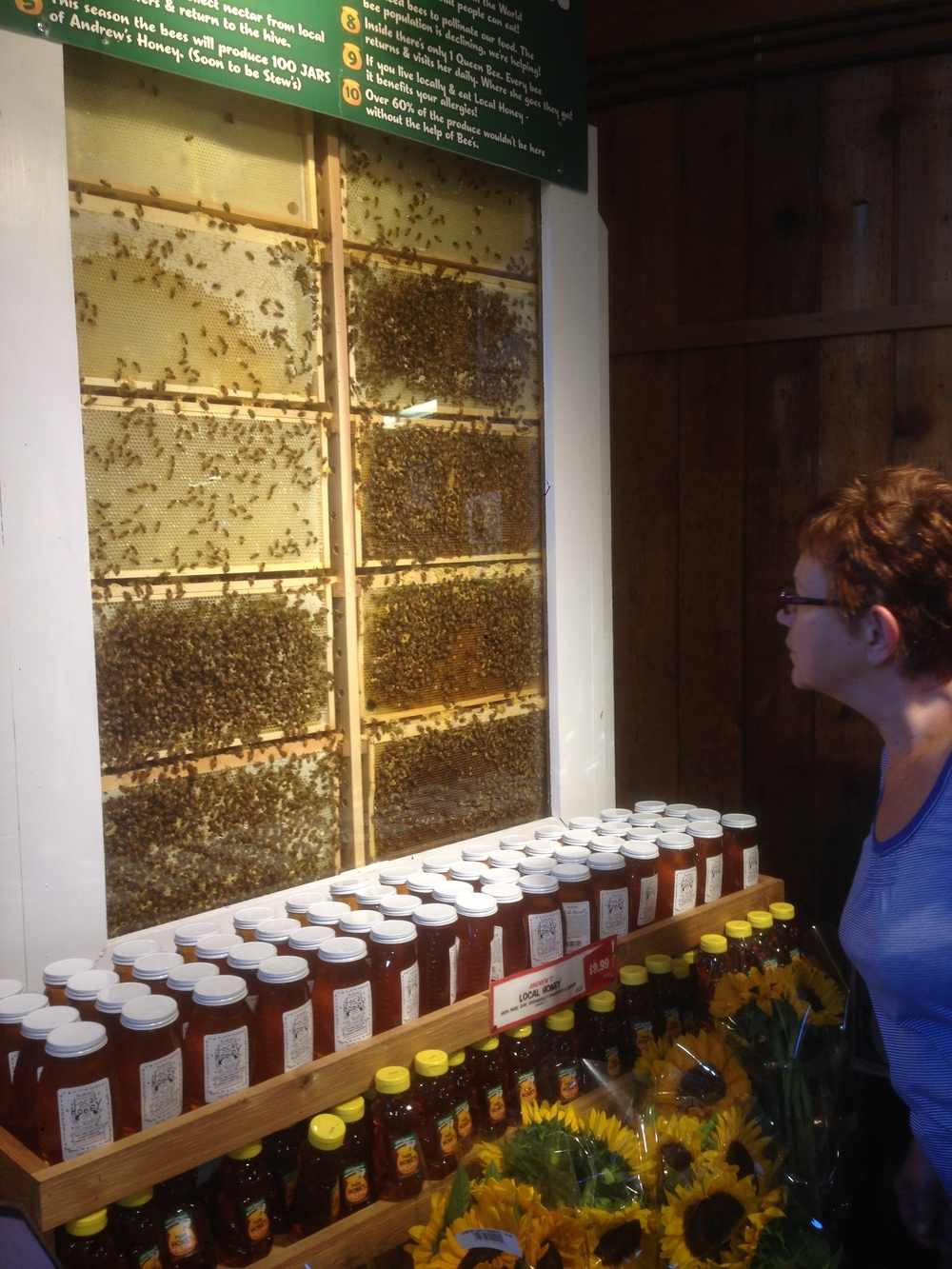 Observation Hive of Honey Bees