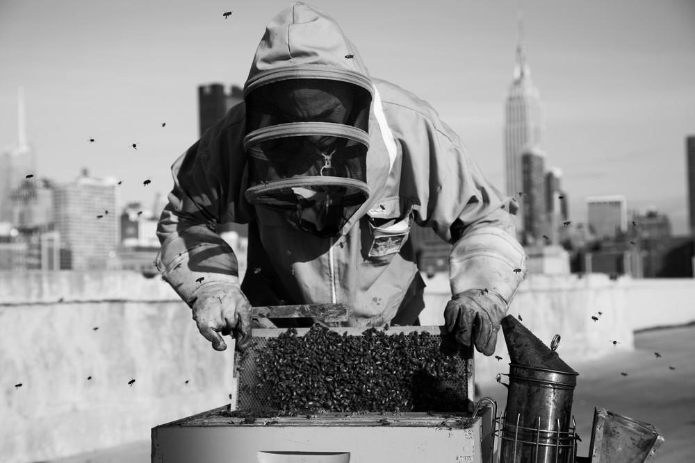bees-26.jpg