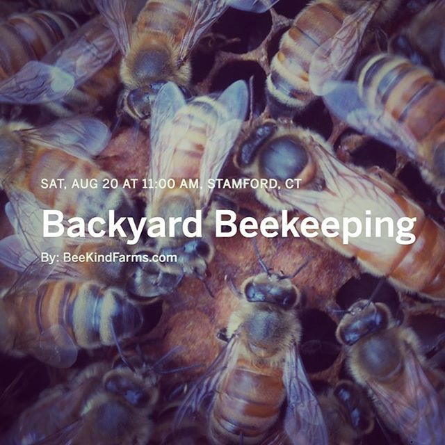 So you want to be a Beekeeper? ** ticket link in profile** #beekeeping #homesteading  #backyard #beekeeper #connecticut #fairfieldcounty #fairfield #stamford #greenwichct #ct #urbanbeekeeping #modernfarmer #westchestercounty #honey #bees #pollen #propolis #royaljelly #wax #venom #queen #worker #drone #workerbee #langstroth #hive #beehive #backyardbeehive #apiary