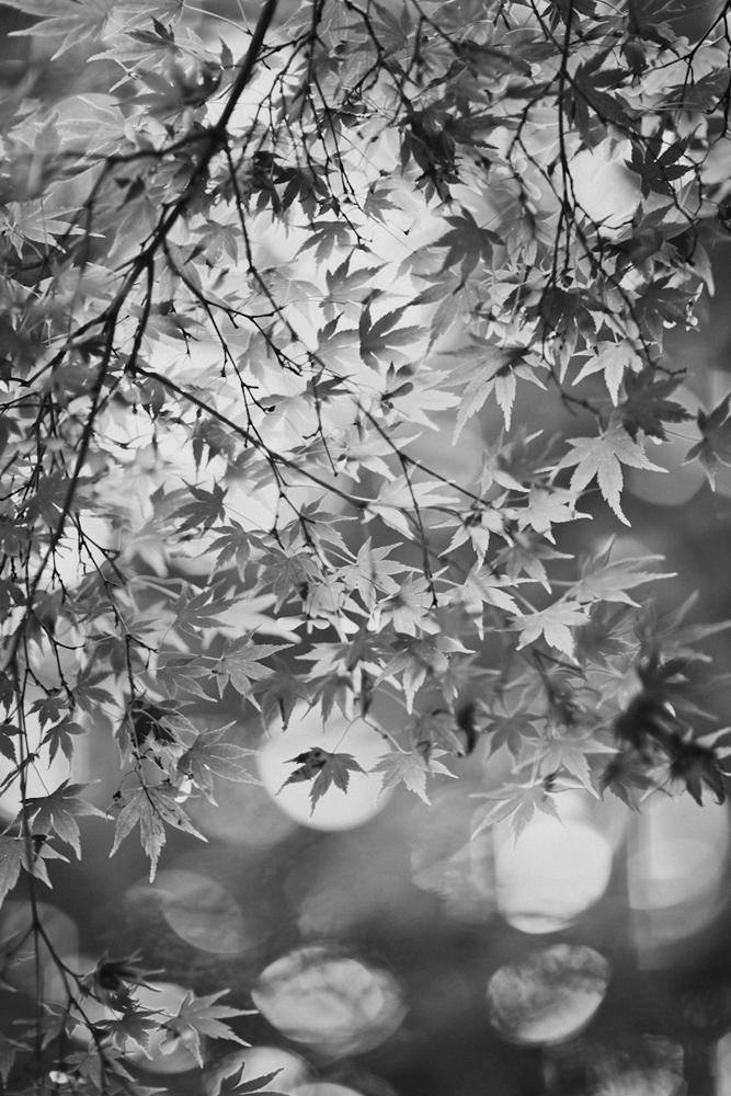 SHANNONPARAS_Japan_21.jpg