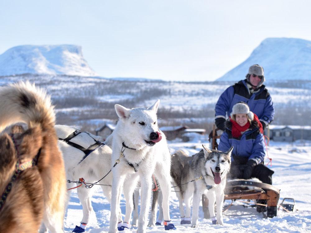 Dog sledding 狗拉雪橇