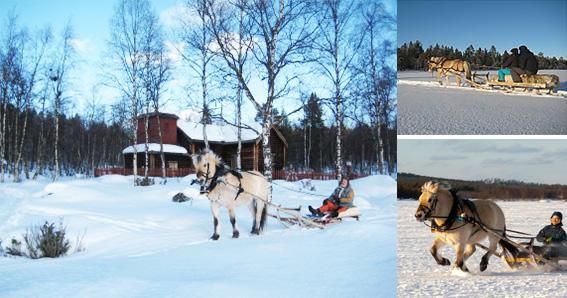 horse sledding.jpg