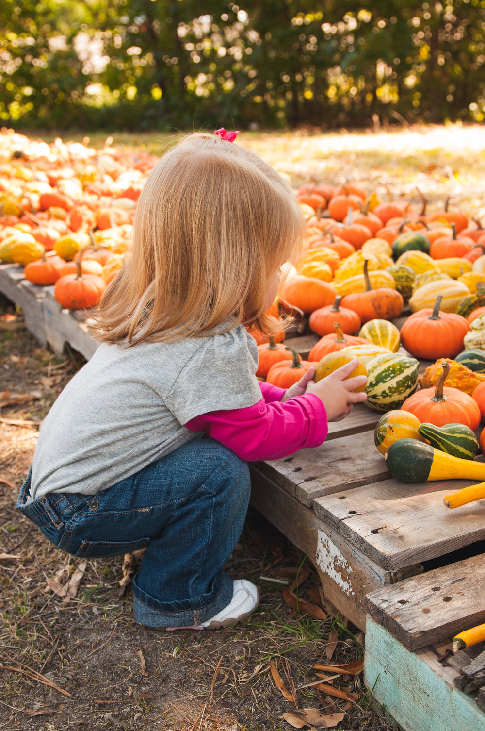 fall-family-photography-sessions-cary-7.jpg