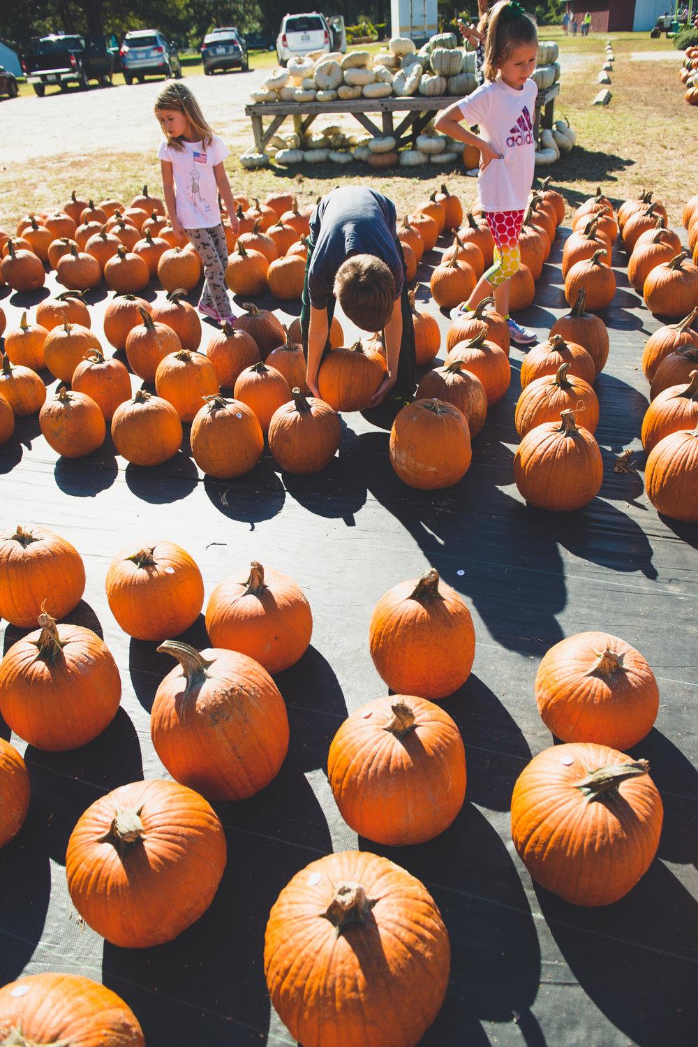fall_pumpkin_patch_family_portrait_raleigh-3.jpg