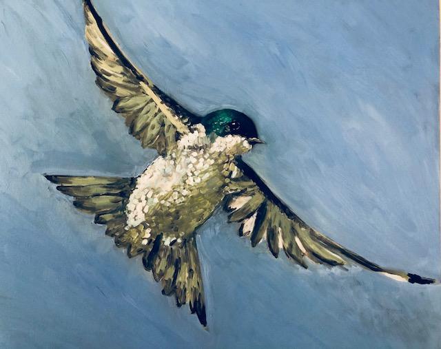 """Flight: Tree Swallow oil on board, 20"""" x 24"""" Celia Meade"""
