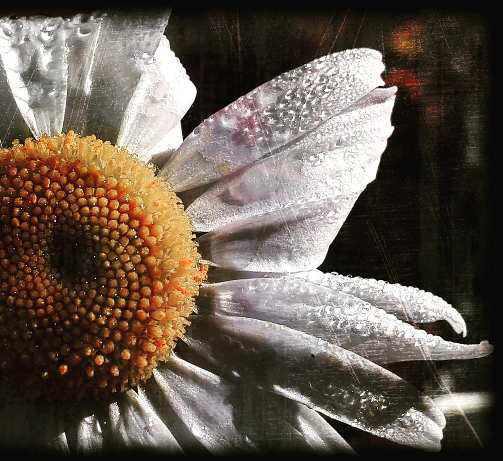 "ISABELLE DeLAUNIERE ""Morning Dew"" 16""x16"" photograph $275"