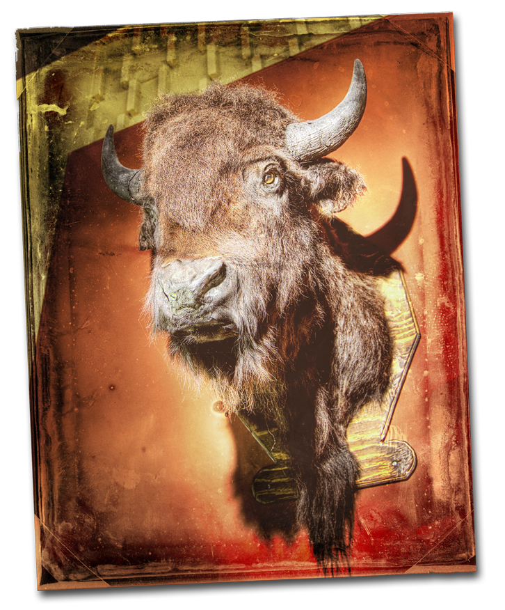 Buffalo-head.png