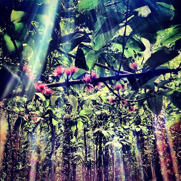 We were in a valley full of these mountain apple blossoms and the light was streaming through and the prisms were confirming the feelings inside.