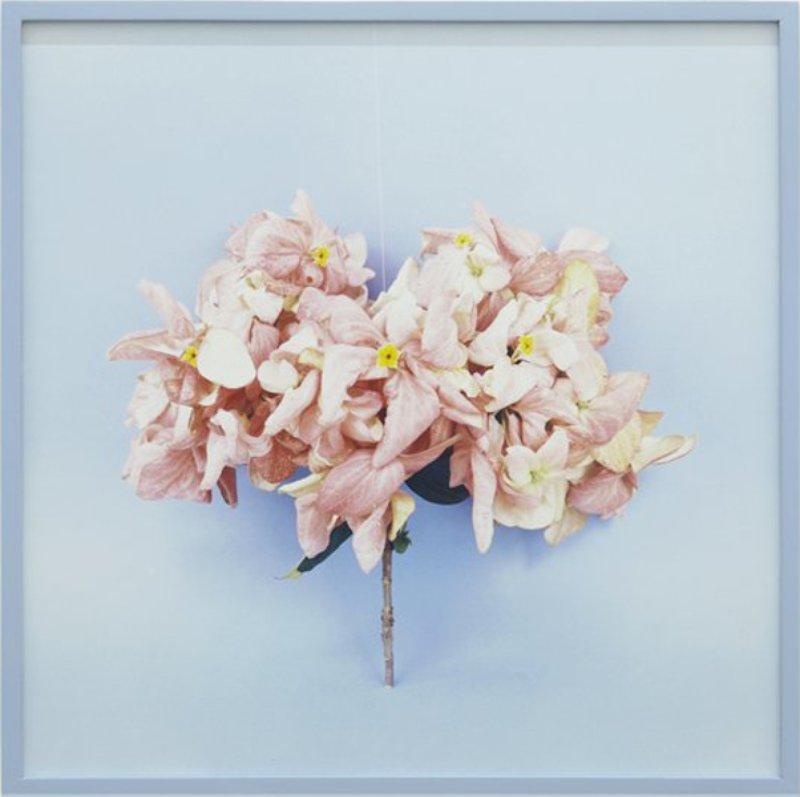 SÁRI EMBER Bouquet ,2014