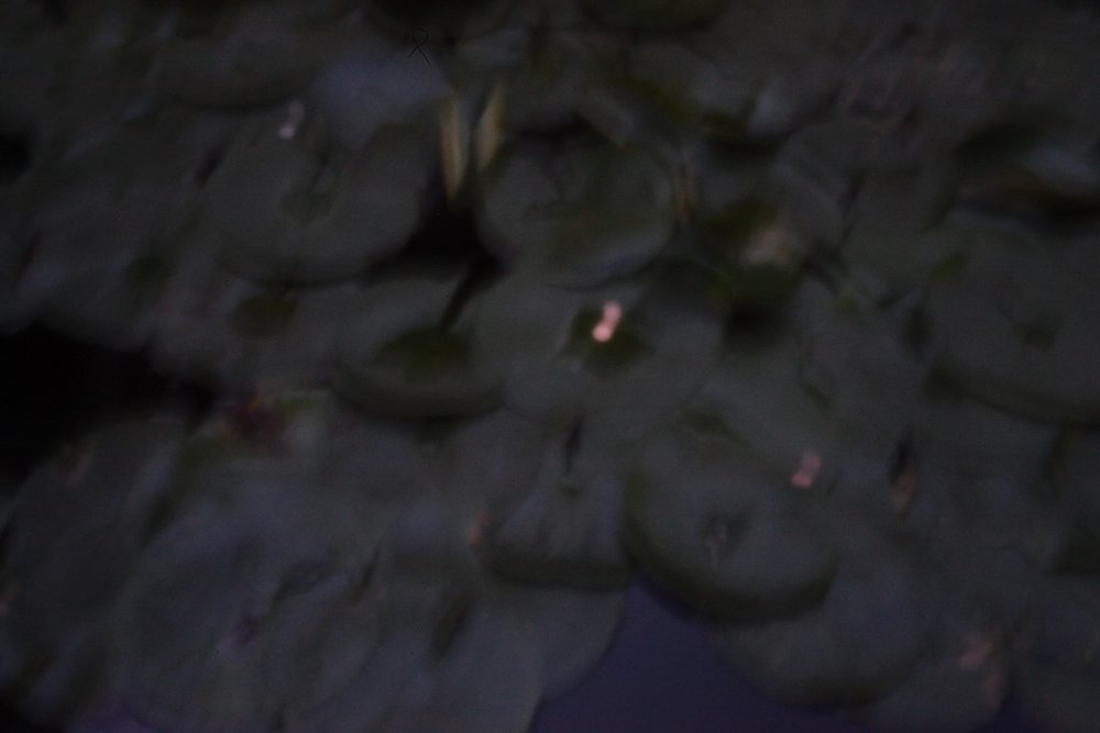 lily pads w coins, digital pinhole