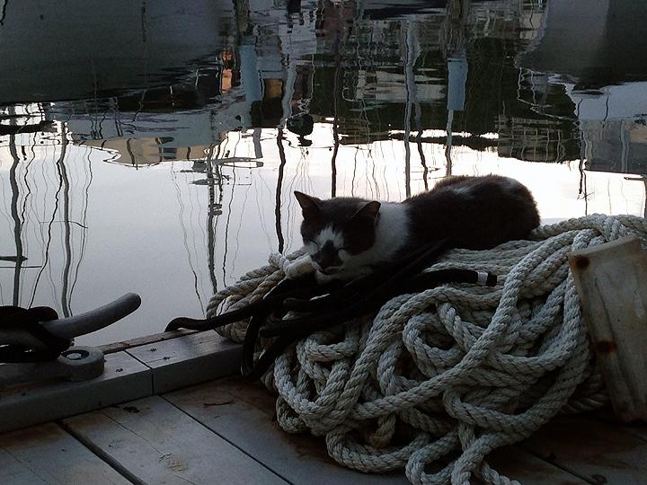 Marina cat Shorty.