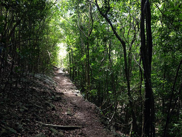 Reef Bay trail, St. John, USVI