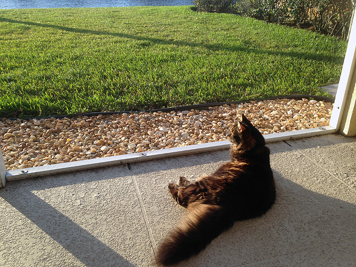 Lucy monitors lizards, birds, squirrels, and (yes) aligators from the safety of the lanai