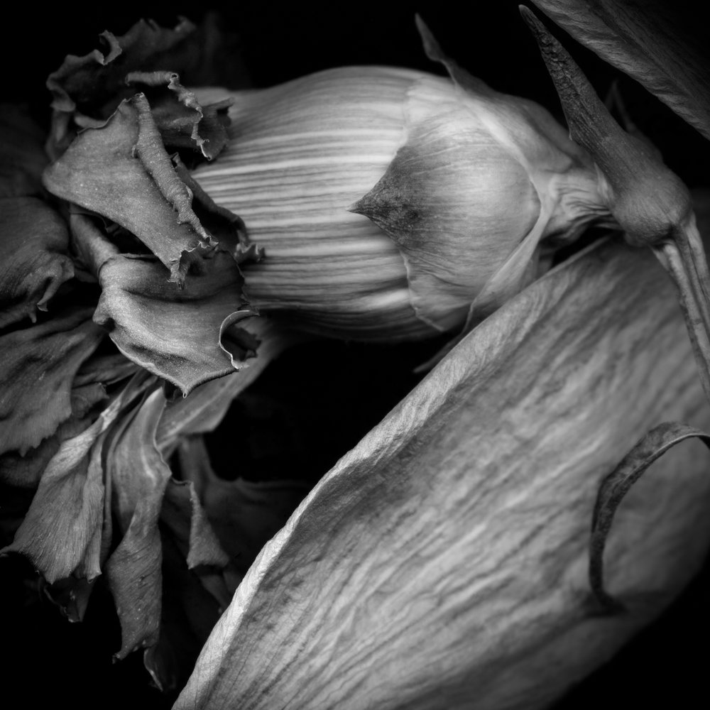 Carnation MASTER.jpg