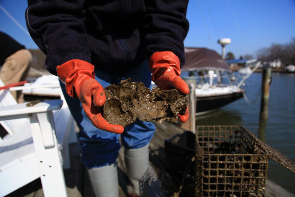 Image courtesy Chesapeake Bay Program