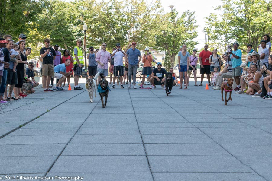 For the third year, friendly pets on leashes, in cages, or in aquariums are invited to march in our Pet Parade. Pets and their owners are also encouraged to enter our pet-themed contests. Image by Barbara Gilbert/Capital Photography Center.