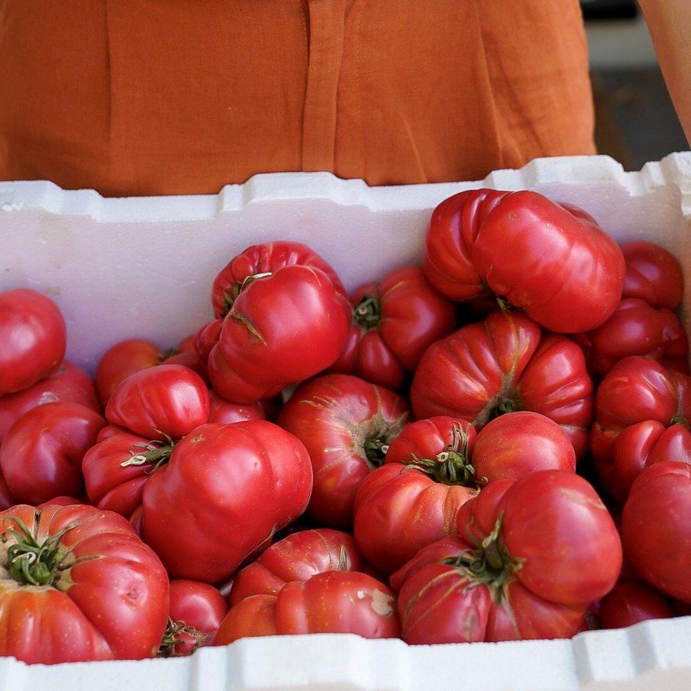 Tomato 1_sq.jpg