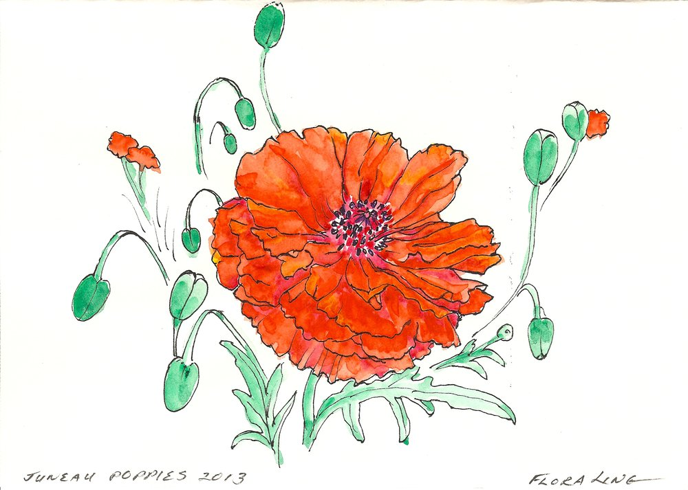 Poppy 2013.jpeg