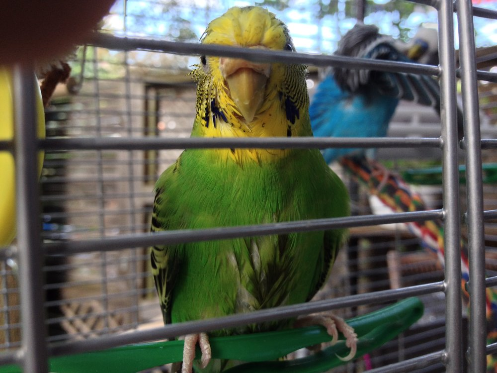 Photo: CK (Her name is Toph, his is Picard. They just had a cooling spray of mist while outside in the sun. Ruffled feathers, but in a good way!)