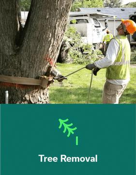 tree-removal.jpg