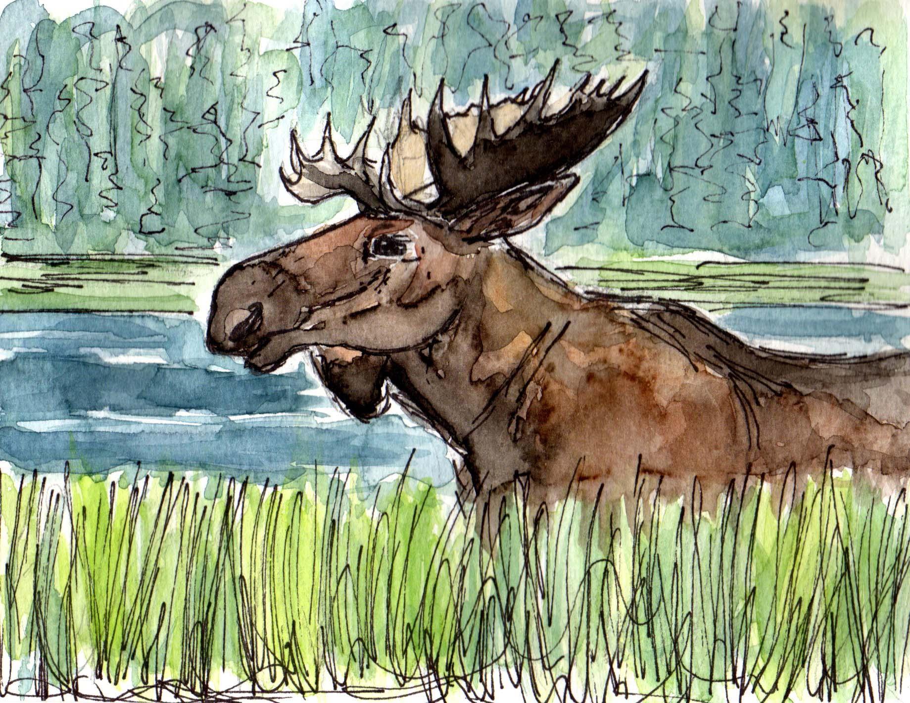Moose003