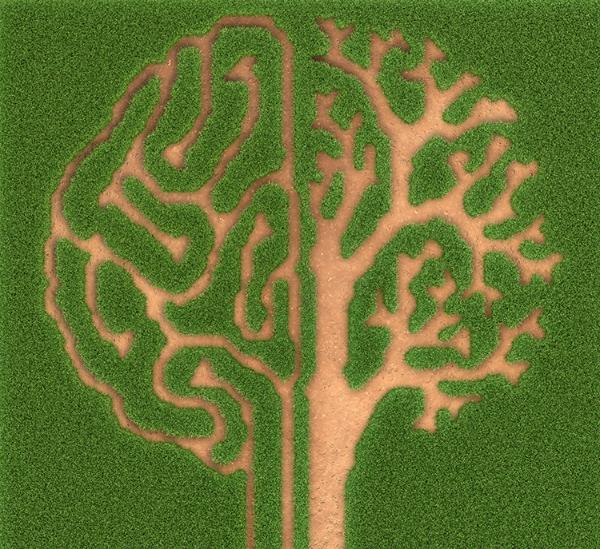 Brain-garden.jpg