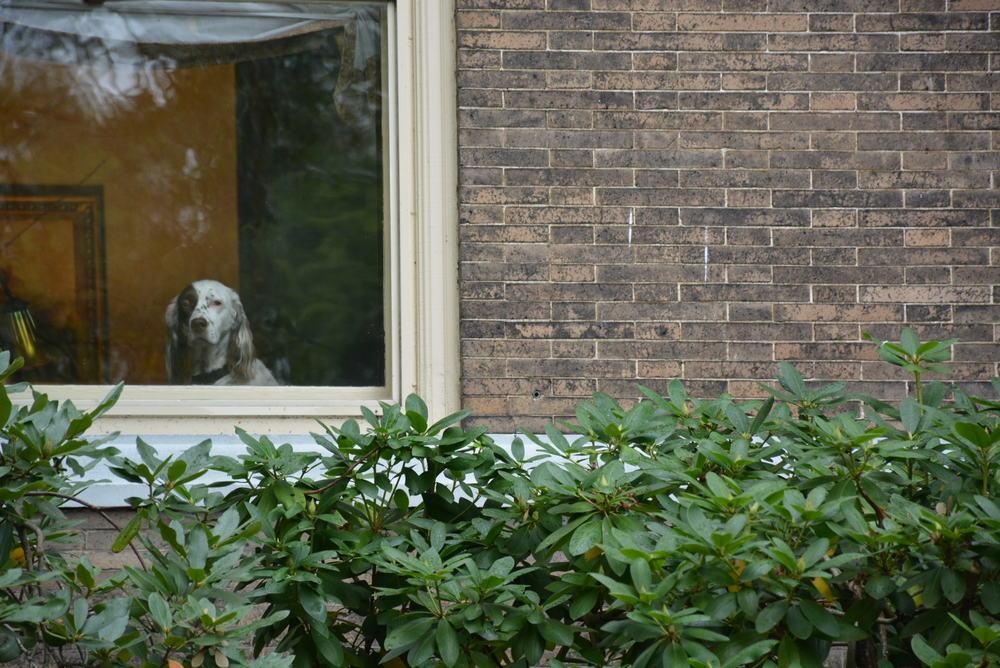 pensive_dog.JPG