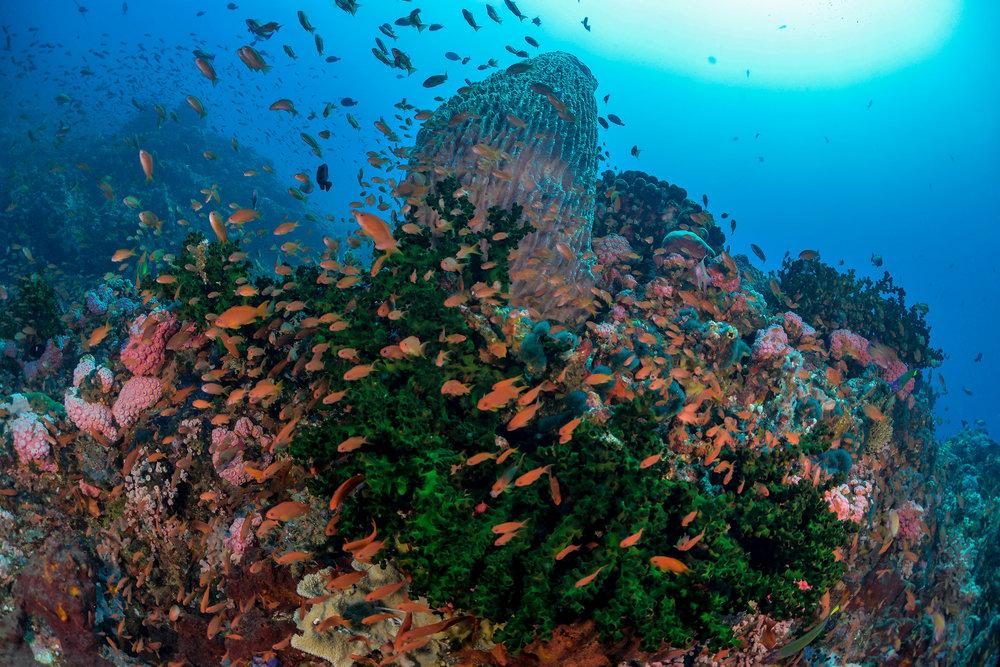 Noel-Guevara---Verde-Island-TIFF.jpg