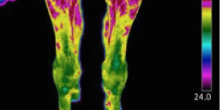 Thermal Imaging - Equestrian