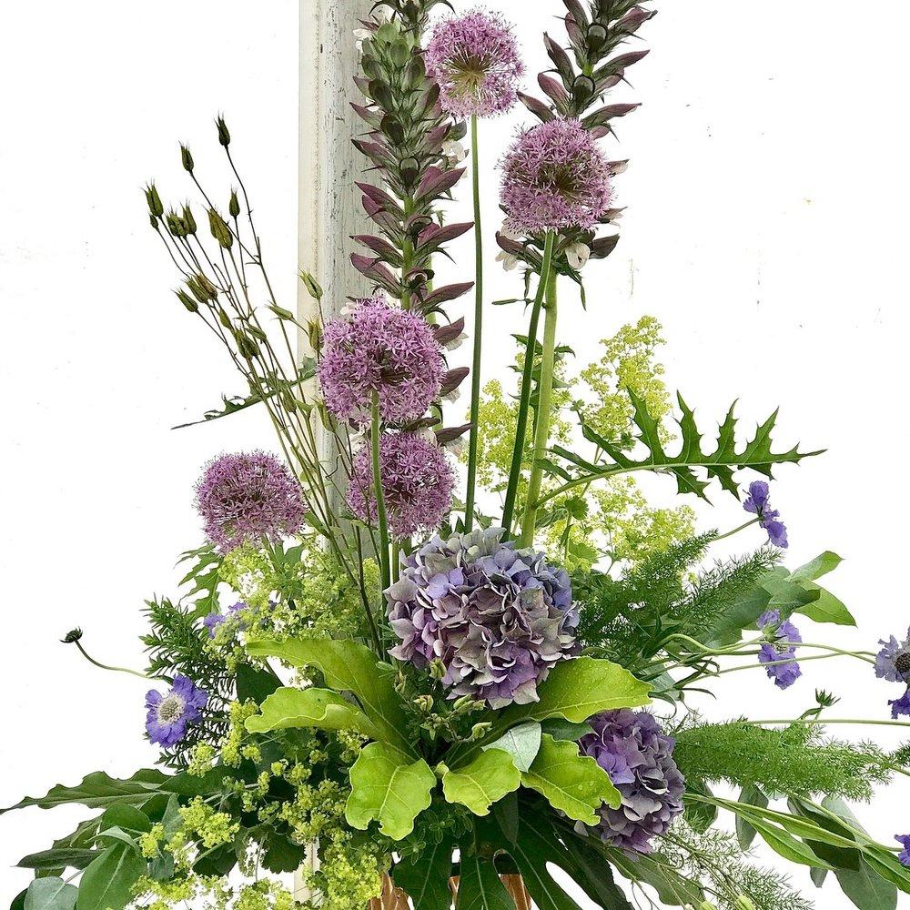 Hydrangea macrophylla 'Bela' , Allium 'Gladiator', Alchemical mollis 'Robustica', Scabiosa 'caucasica, Fatsia japonica, Acanthus mollis pods and Asparagus meyers.