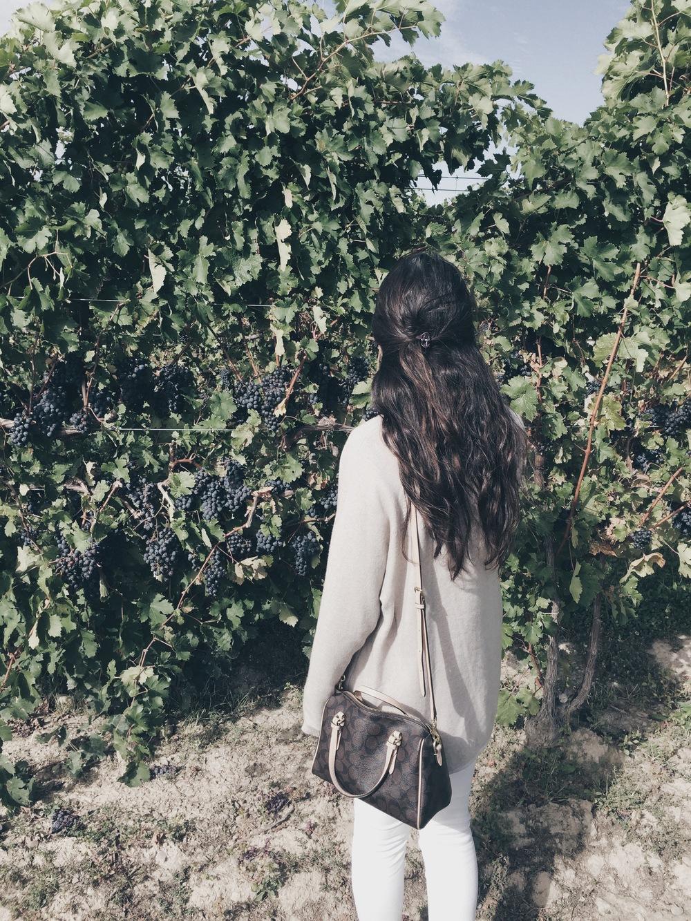 wine_tour_grapes