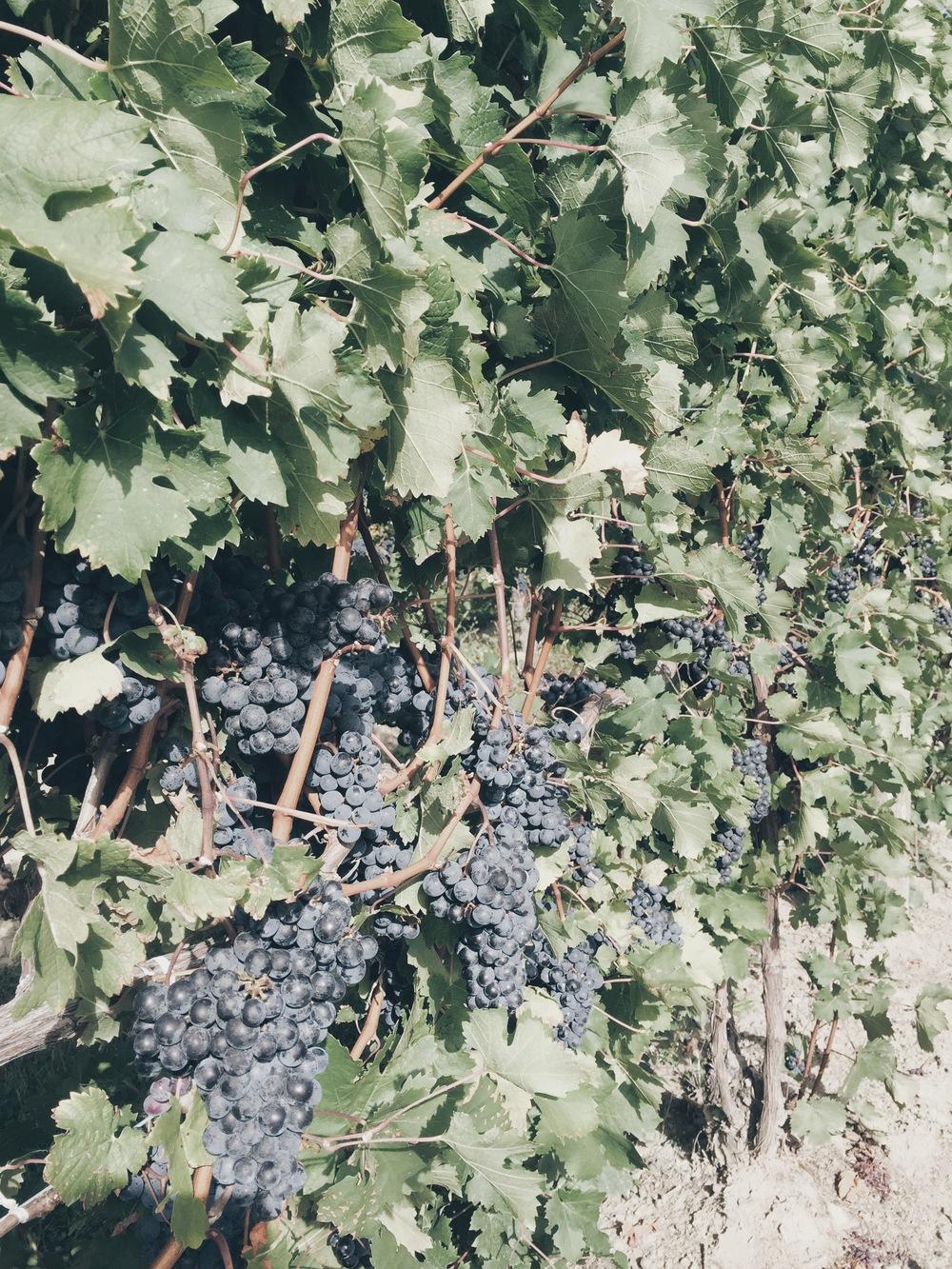 seneca_lake_wine_tour
