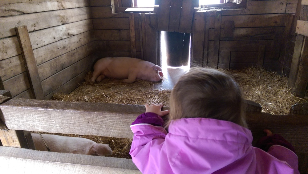 Cece loves pigs.
