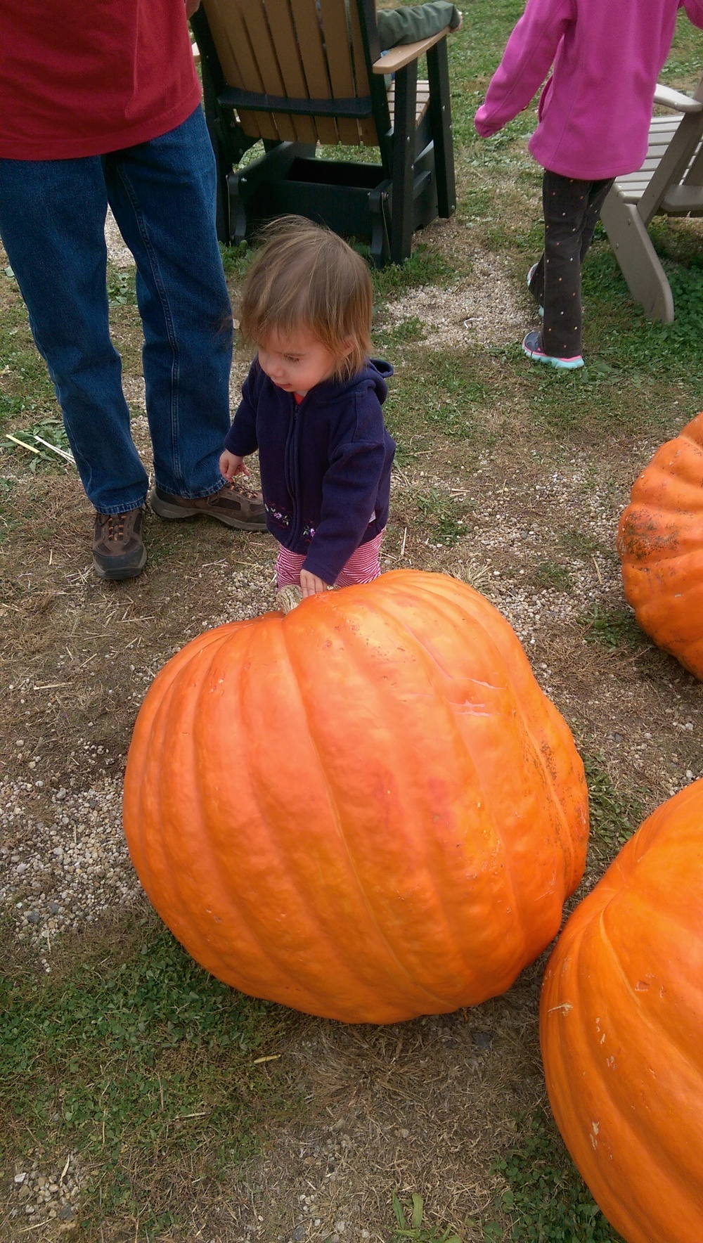 Pumpkins bigger than Cece