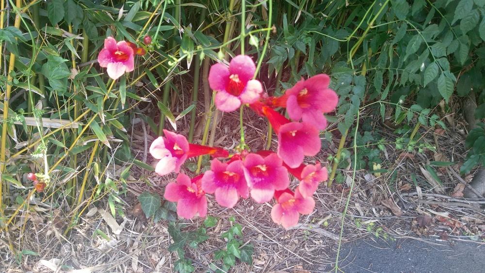 Random flowers near the office