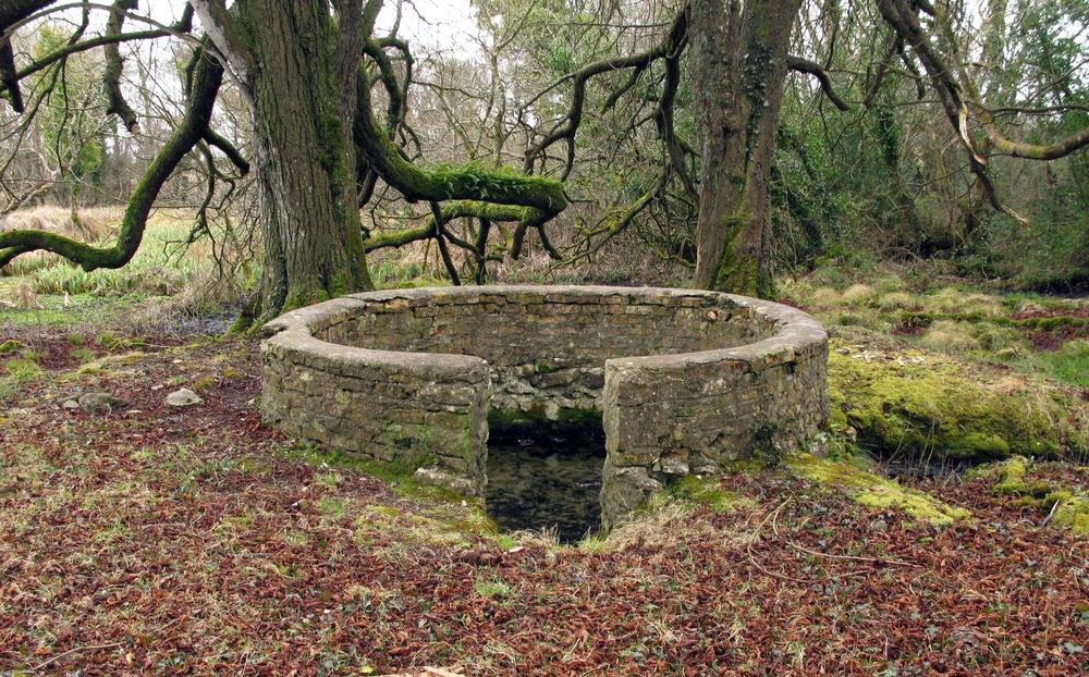 11. St. Brigid in yhe Woods. County Roscommon. Den smukkeste kilde, jeg fandt på min opdagelsesrejse.