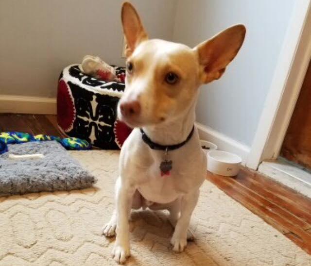 Photo taken by our Park Slope dog walker Liz