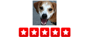 """When   we first moved to Park Slope, we met with several dog walkers to find the one we thought was the best fit and we chose Dogger. Ian has done a great job with my pup. He uses   Petcheck   Technology which makes the whole process so easy - he includes a message and pictures and the website allows for easy payments and tracking on our pup's walk.     –  Nicholas L."
