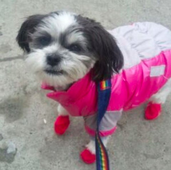 Photo of Sundae by our Windsor Terrace dog walker Trudi
