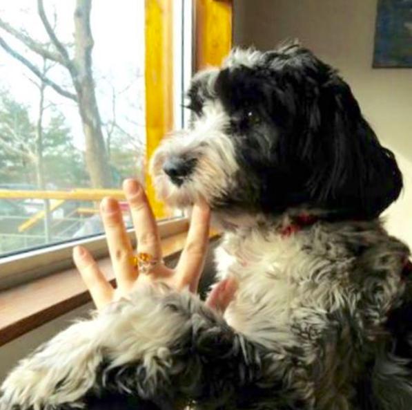 Photo of Tisa by our Park Slope dog walker Liz