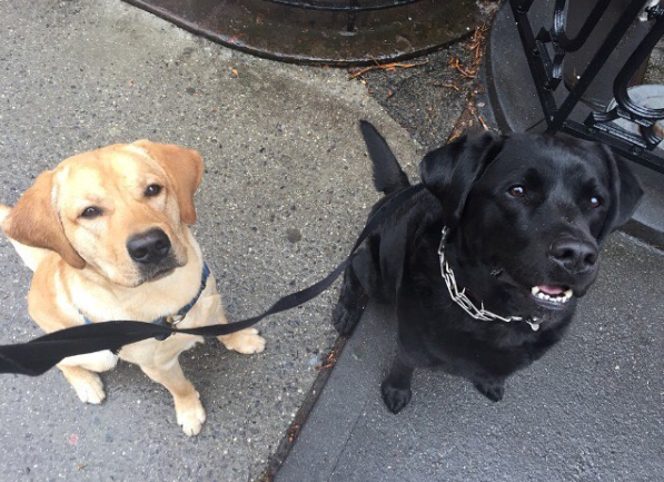 Photo by our Fort Greene dog walker Molly
