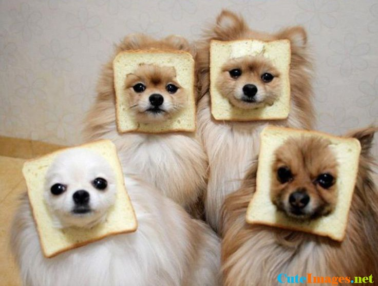 in-bread-dogs-name-cuteimages.net.jpg