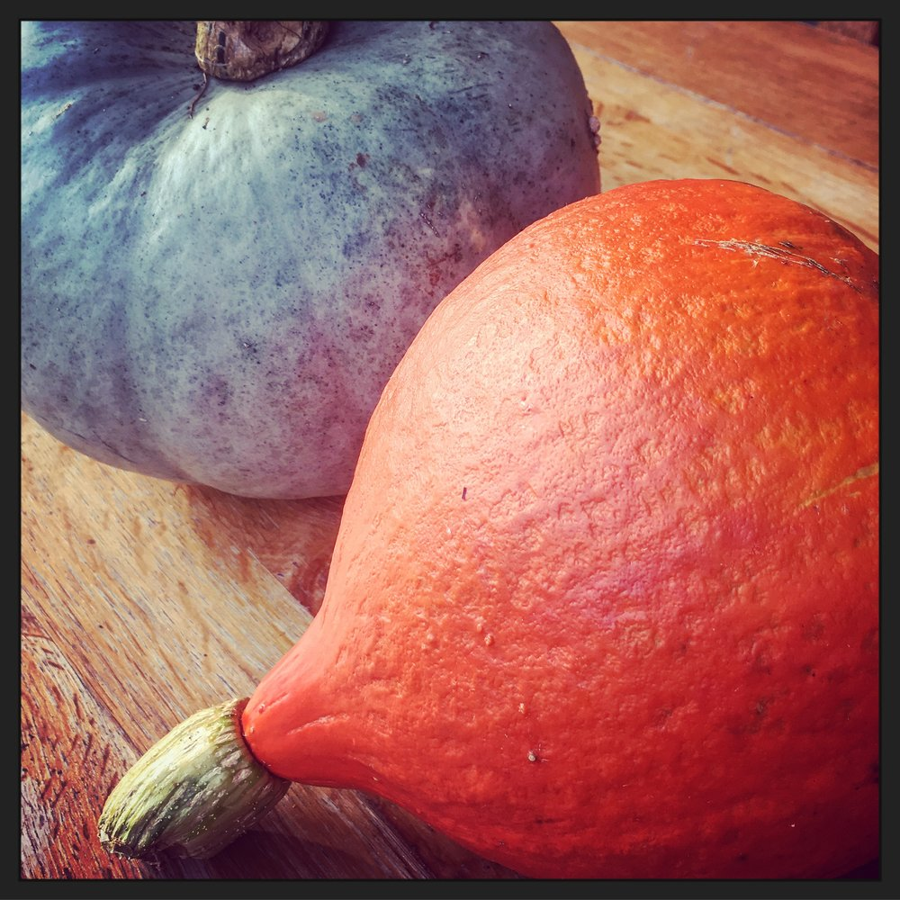 Potimarron & blue hubbard pumpkin