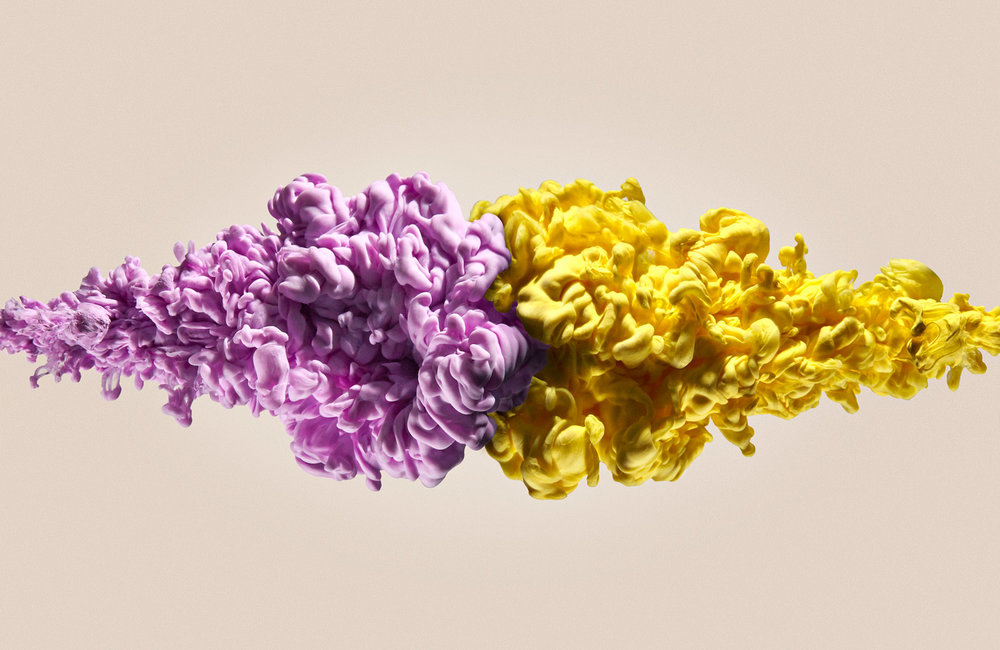 Purple-Yellow-Head-to-Head.jpg